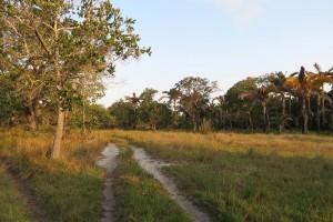 Kosi Bay Nature Reserve - Kosi Forest Lodge