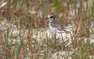 Birdwatching in Northern KwaZulu-Natal