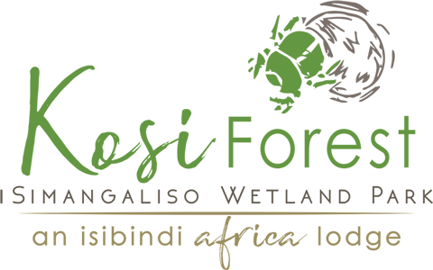 ISIBINDI_Kosi-Forest-1024x1024px