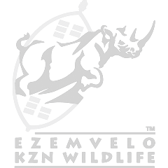 https://www.kosiforestlodge.co.za/wp-content/uploads/sites/15/2018/02/EZIMVELO-1.png